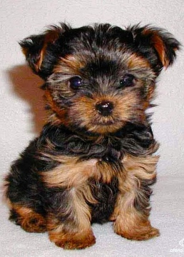 Popular Small Dog Breeds List Picture